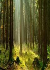 Lundi 10 août 2020 - Méditation avec les arbres -  Royère-de-Vassivière (23)